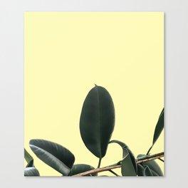 ficus elastica the nature series Canvas Print
