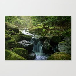 Flowing Creek, Green Mossy Rocks, Forest Nature Photography Canvas Print