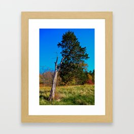 Old Cedar Tree Framed Art Print