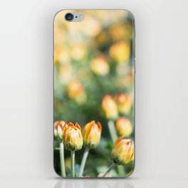 Yellow Flowers at Fall Domes Show iPhone Skin