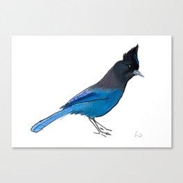 Steller's Jay Canvas Print