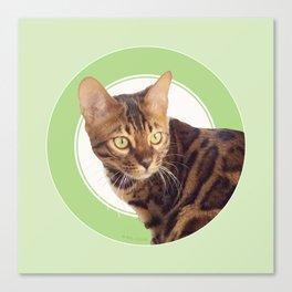 Boris the cat - Boris le chat Canvas Print