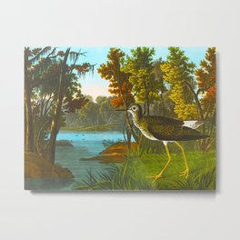 Yellow Shank Bird Metal Print