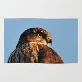 Young Cooper's Hawk Rug