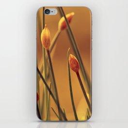 Allium 175 iPhone Skin