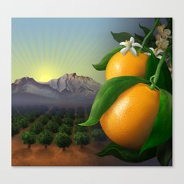 Satsuma Mandarins Canvas Print