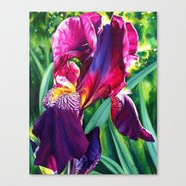 The Queen's Iris Canvas Print
