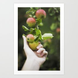 Picking Apples Art Print