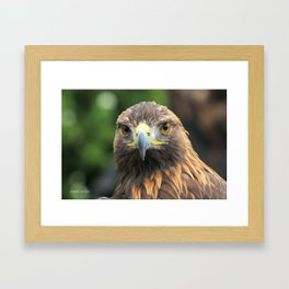 aigle Framed Art Print