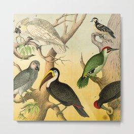 6 Birds Metal Print