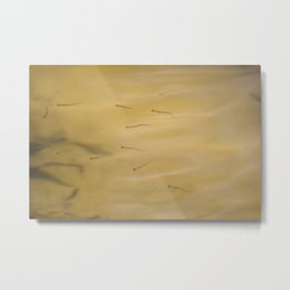 Minnows Metal Print