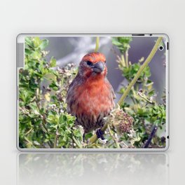 Handsome Male House Finch Laptop & iPad Skin
