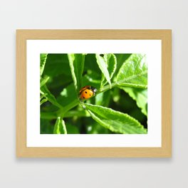 La Lady Bug Framed Art Print