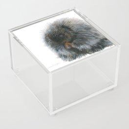 Vinnie the Porcupine by Teresa Thompson Acrylic Box