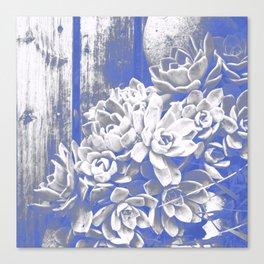 Cobalt & White Hen & Chick Succulents Canvas Print