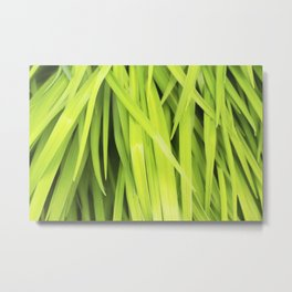 Summer Green Leaves Metal Print