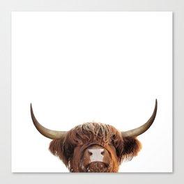 Highland cow, brown cow Canvas Print