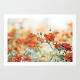 Orange Rose Flower Photography, Red Orange Roses, Burnt Orange Flowers Art Print