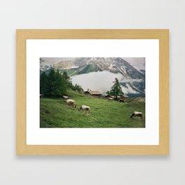 alpine cows Framed Art Print