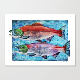 Spawning Red Salmon Canvas Print