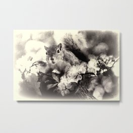 Feeling Squirrelly Today Metal Print