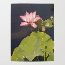 Pink Lotus by Teresa Thompson Poster