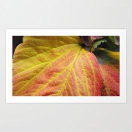 Closer to Nature Art Print