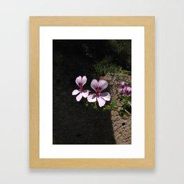 Flowers in Italy Framed Art Print