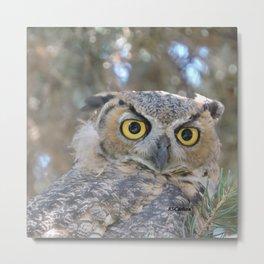 Young Owl at Noon Metal Print
