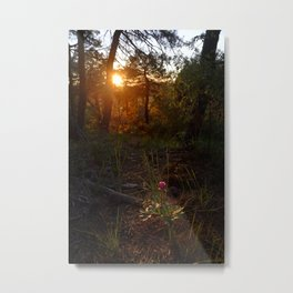 """""""Flower Into The Woods"""" Happy Peony looking for the last sun.. Metal Print"""