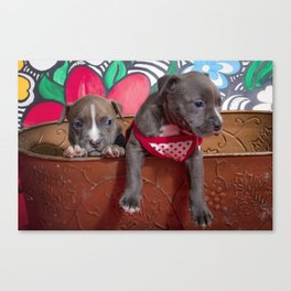 Cute Brother and Sister Pitbull Puppies with Blue Eyes Cuddling Together in a Spring Basket Canvas Print