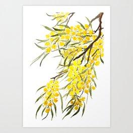 Godlen wattle flower watercolor Art Print