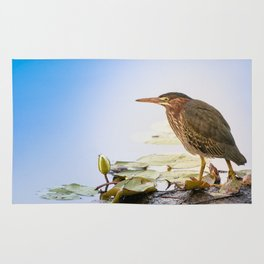 Crowned Night-Heron- Hammond pond Rug