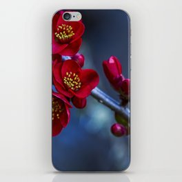 Red Flowering Quince iPhone Skin