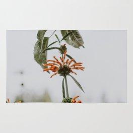 Nature's Reach Rug