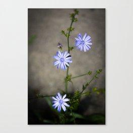 Chicory In The Concrete Jungle Canvas Print