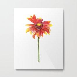 Indian Blanket Wildflower Watercolor Metal Print