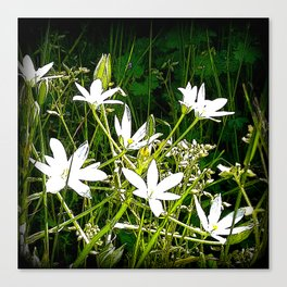 White wildflowers. Canvas Print