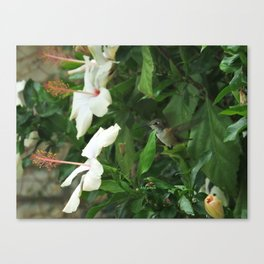 Lady Lurking in the Shade Canvas Print