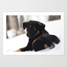Puppy In The Snow Art Print