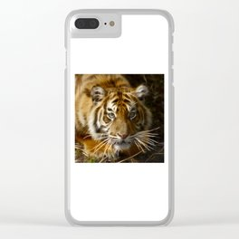 Tiger20151207 Clear iPhone Case