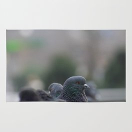 The Pigeon that dared to look back Rug