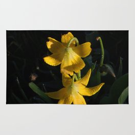 Dew drops on Yellow Glacier Lilies in Glacier National Park Montana Early Morning Rug