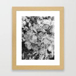 Winter Hydrangea in Black and White Framed Art Print