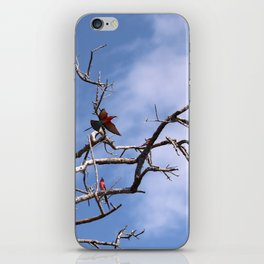 Southern Carmine Bee-eaters iPhone Skin