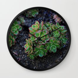 Succulent cactus green flowers red finished a lot of Wall Clock