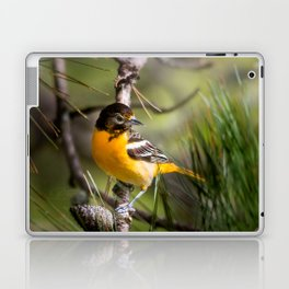 Oriole and Pine cone Laptop & iPad Skin