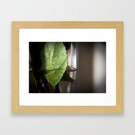 Roseleaf  Framed Art Print