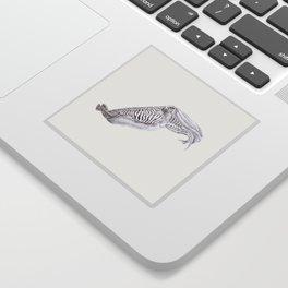 Cuttlefish Sticker