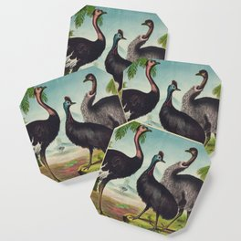 Vintage Illustration of Ostriches (1874) Coaster